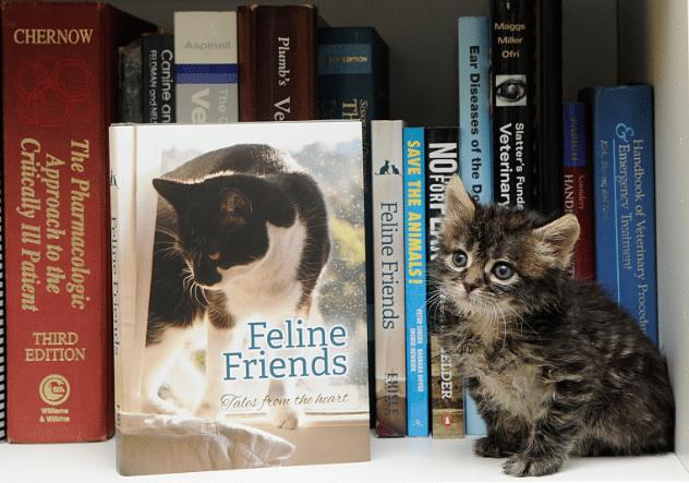 Feline Friends book launch by Dr Anne Fawcett