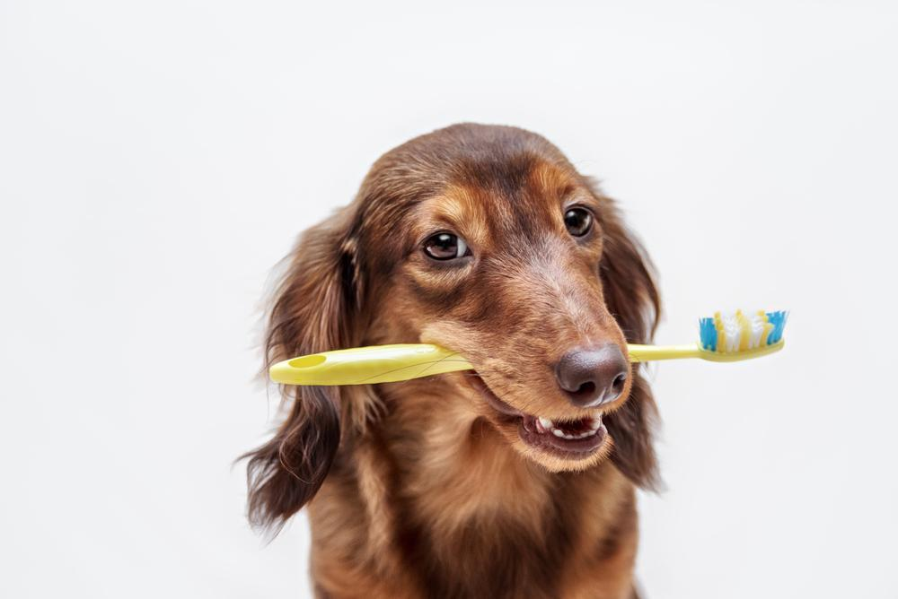 Free Dental Health Check at Sydney Animal Hospitals