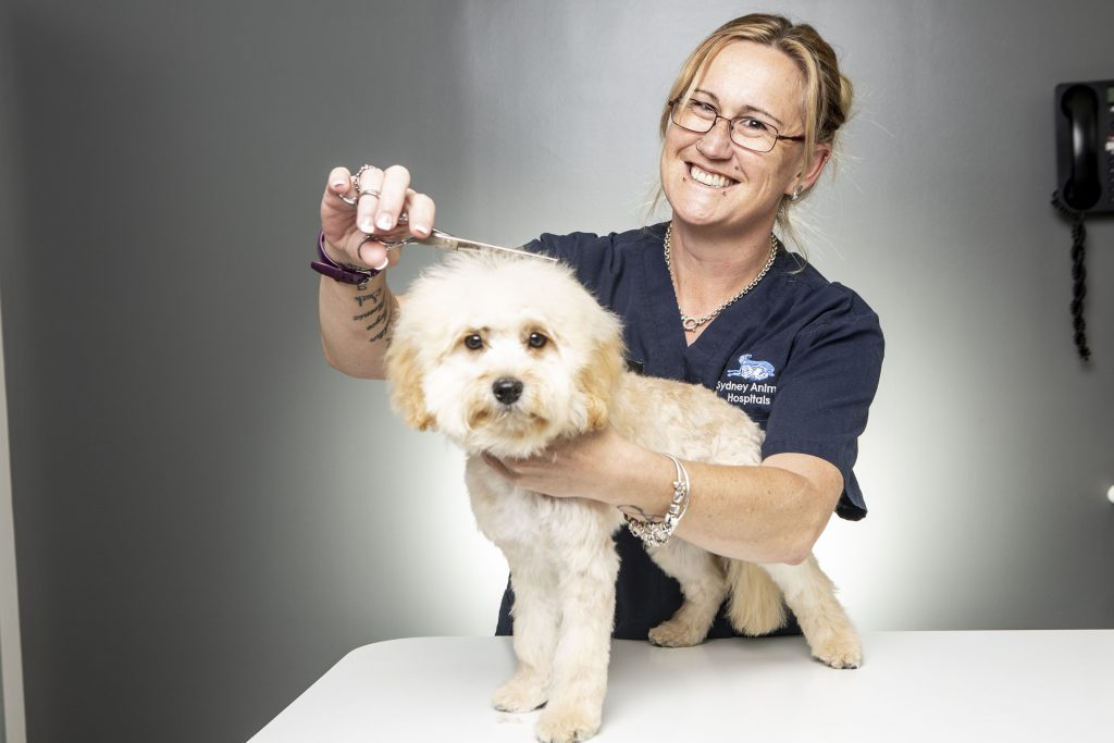 Dog Grooming Sydney Animal Hospitals