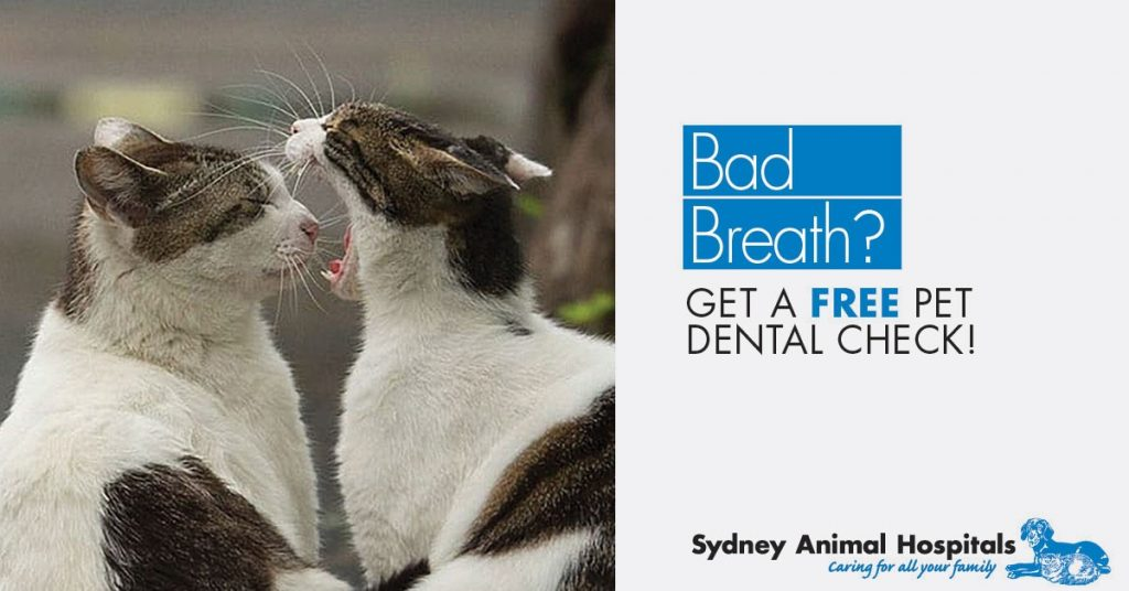 Does your pet have smelly breath?
